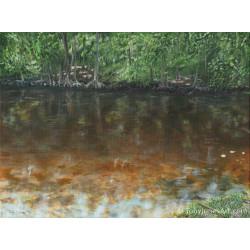 Oklawaha Creek - Prints -...