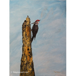 Pileated Woodpecker -...